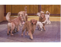 dog resort na Zona Norte