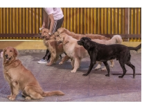 onde encontrar dog resort na Zona Norte